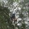 Looking For An Arborist Singapore? Here It Is