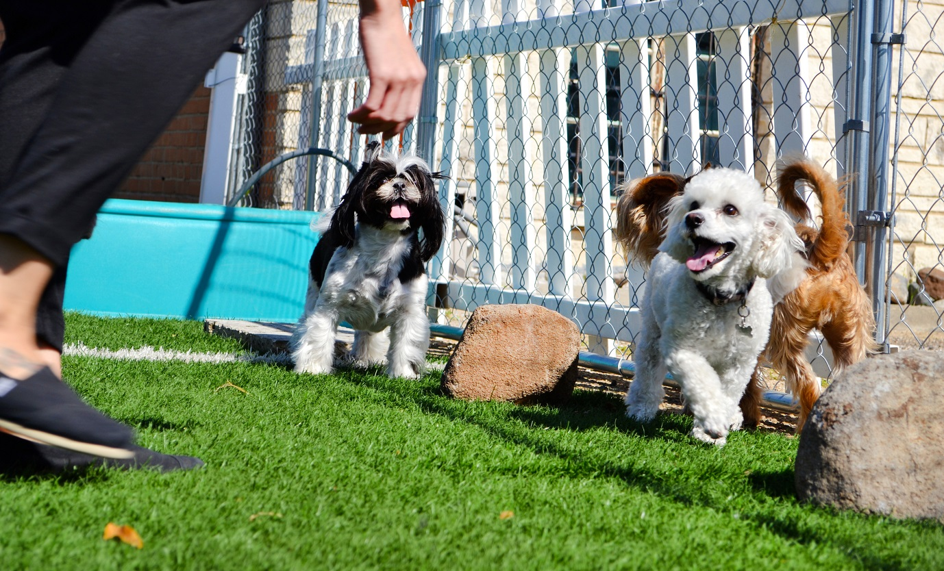 Hounds Town Dog Care Business; A Business Of Love And Affection For Your Pets