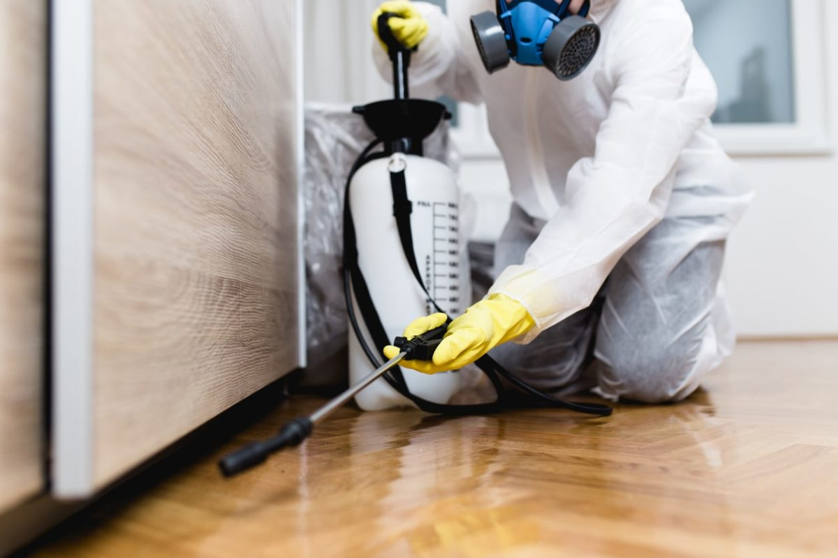 Mistakes to Avoid When Choosing Your Pest Company